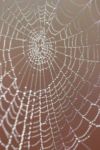spider's web with dew drops background